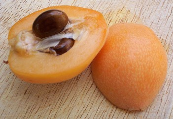 Loquat fruit - Cross section of Big Jim