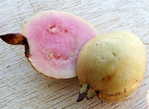 Tropic Pink Guava Fruit